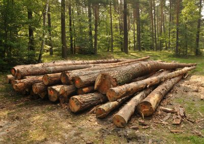 Nylund logs stacked